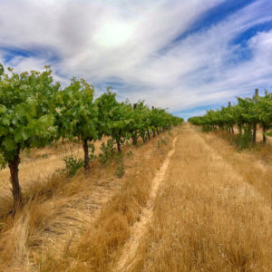 Patersons Gundagai Australian Wine VINEYARD 澳洲悉尼葡萄園紅酒