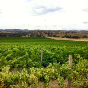 Patersons Gundagai Australian Wine VINEYARD GALLERY